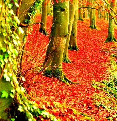 Autumn Forest, Dublin, Ireland