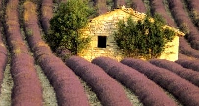 Lavender Field/Stone House, Provence, France