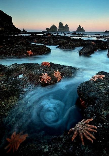 Starfish Colony, South Island, New Zealand