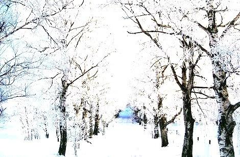 Snowy Lane, Galaverna, Sweden