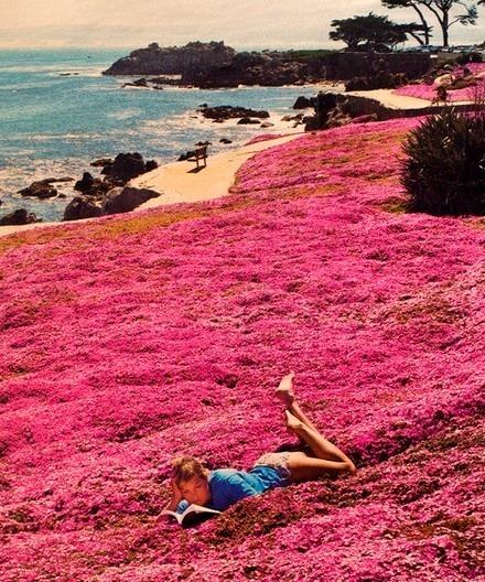 Seaside Park, Monterey, California