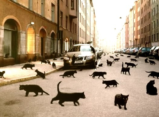 Black Cat Invasion, Oslo, Norway