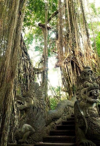Giant strangler fig at Ubud Monkey Forest, Bali / Indonesia
